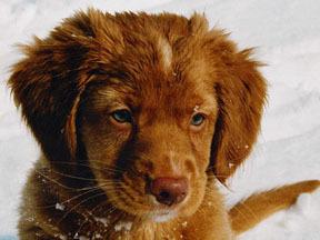 2007-08-09-puppy.jpg