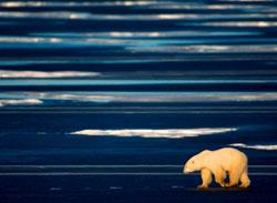 2007-11-01-bearwalking.jpg