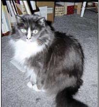 2007-11-02-munchie.jpg