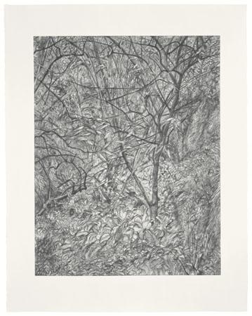 2007-12-14-Garden_in_Winter_etching_Freudsized.jpg
