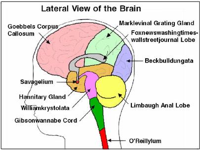 Diagram Of The Corpus Callosum - Block And Schematic Diagrams •