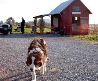 2008-02-05-vermont_dog.jpg