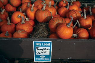 2008-02-05-vermont_pumpkins.jpg