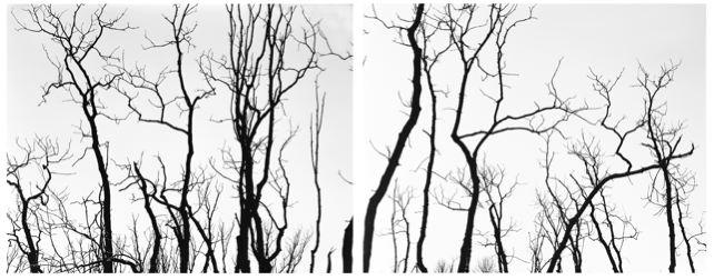 2008-03-21-5.jpg
