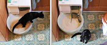 cat genie litter box