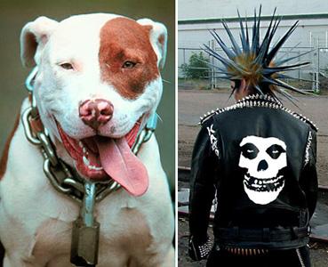 2008-08-22-pitbull.jpg