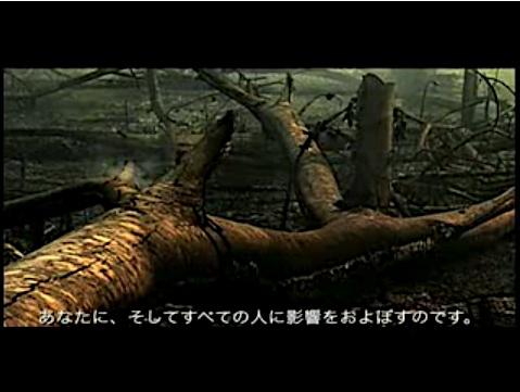2008-09-23-Conservation_International_trees_12.jpg