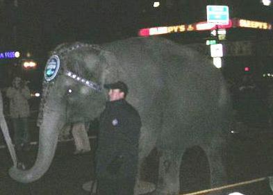 2008-10-10-elephantwalk1.jpg