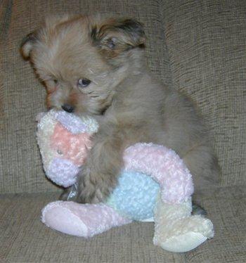 2008-12-07-Puppy.JPG