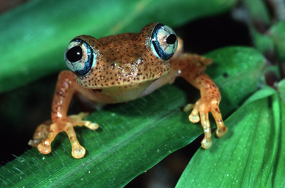2008-12-11-Frog.jpg