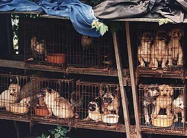 2008-12-13-puppymill.jpg