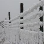 2009-01-27-iced_fence.jpg