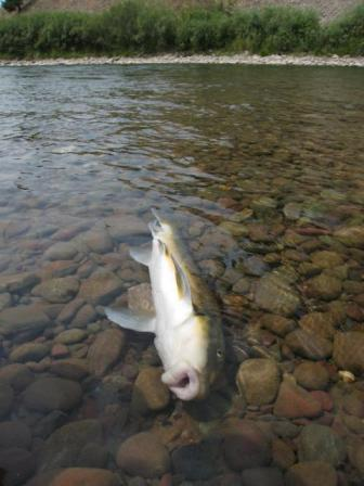 2009-01-30-deadfish.jpg