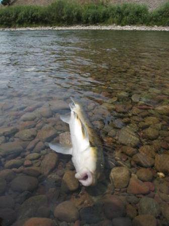 2009-01-30-deadfish.jpg