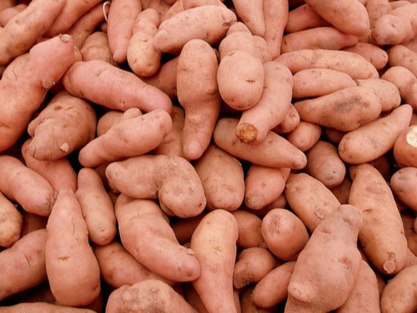 organic sweet potatoes photo