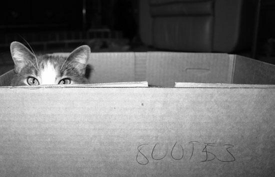 cat box photo