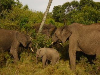 2009-03-29-xxelephants.jpg