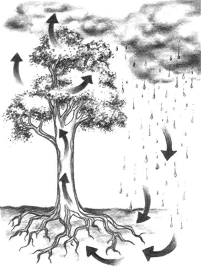 2009-04-05-Treewatercycle.jpg