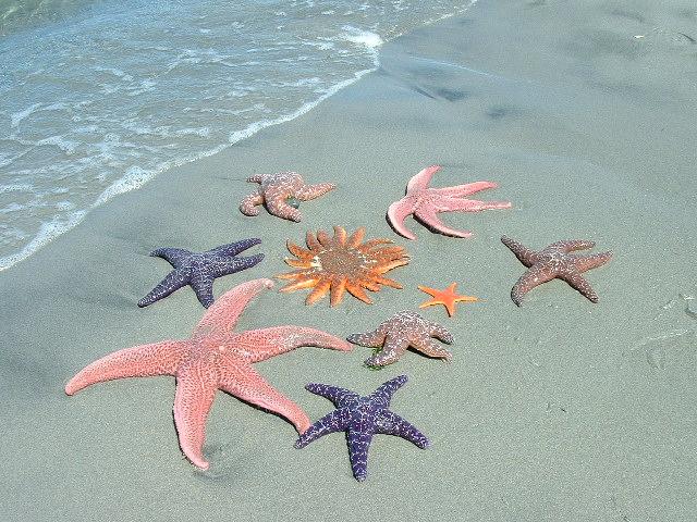 2009-04-21-starfishlg.jpg