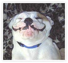 2009-05-06-bulldog_smile.jpg