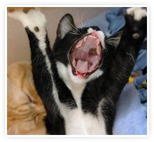 2009-05-06-laughing_cat.jpg