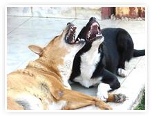 2009-05-06-laughing_dogs.jpg