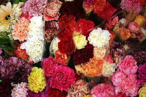 2009-05-08-carnations.jpg