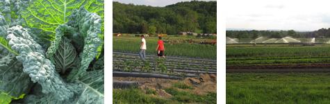 2009-06-08-row3.jpg