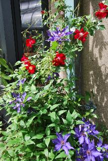 2009-06-12-DSC_0103.jpg