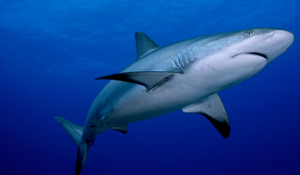 2009-07-10-iStock_shark.jpg