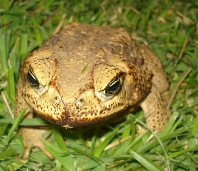 2009-08-14-toadtwo.jpg