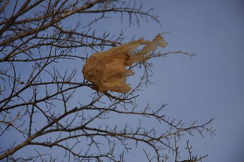 plastic bag photo