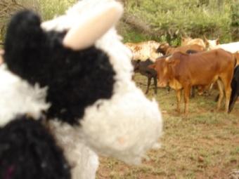 2009-08-29-mucca.jpg
