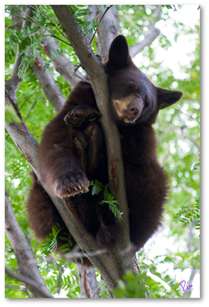 2009-09-17-BearCub2shadowed6x4.jpg