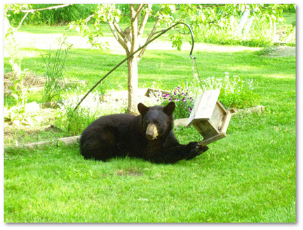 2009-09-17-BearMomwithbirdfeeder5x4shadowedbyKarimaGebel.jpg