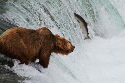 2009-09-25-Bear_Hunting.jpg