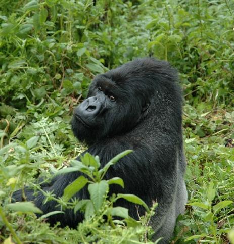 2009-09-28-GorillaShow0442_a.jpg