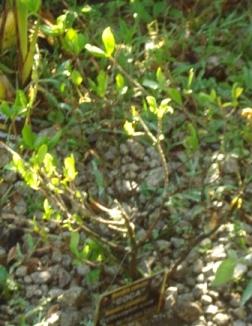 2009-10-09-acoca.jpg