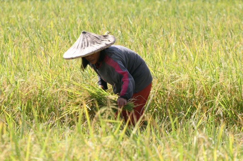 2009-10-14-rice.jpg