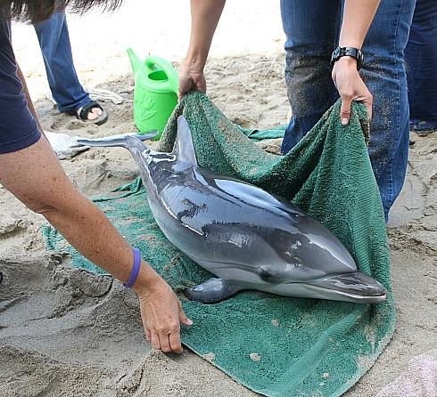 2009-10-21-dolphinjuly09.JPG