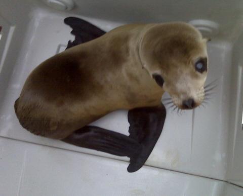 2009-10-21-rescuedseagazer.jpg
