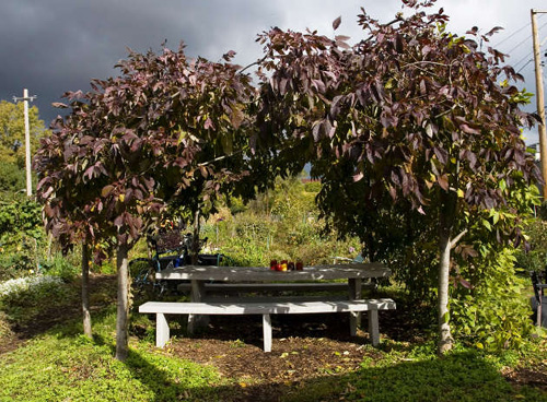 2009-10-28-arbor.jpg