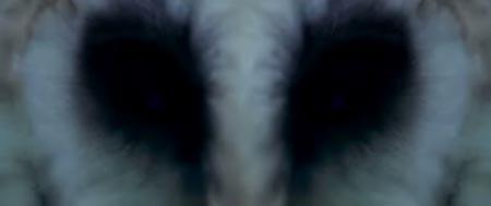 2009-11-02-1aaaowl