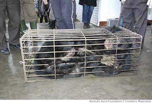2009-11-16-mn_china_bears_ph.jpg