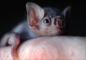 2009-11-19-babybat.jpg
