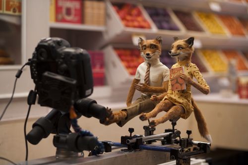 2009-11-20-foxesandcamera.jpg