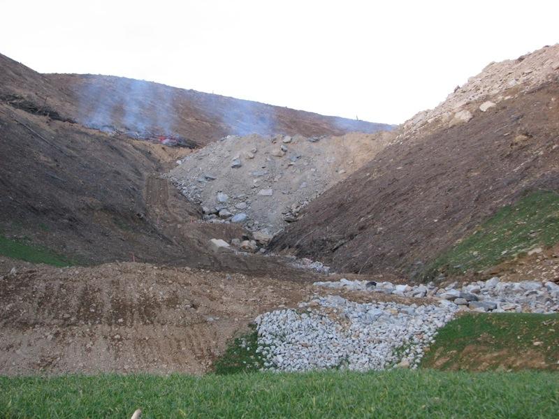 2009-12-02-burntrees.jpg