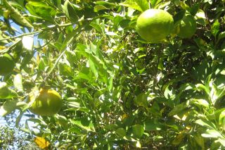 2009-12-02-tangerine.jpg