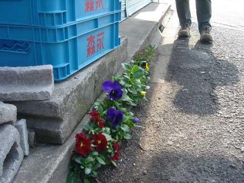 2009-12-03-pansies_sidewalk_suginami_t.jpg