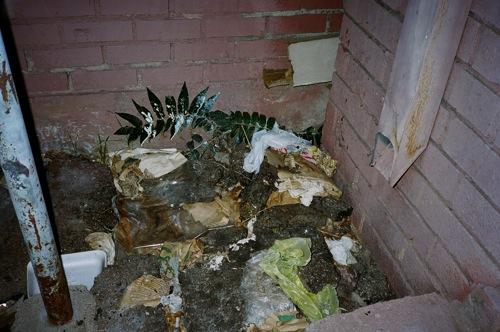2009-12-04-flush6.jpg